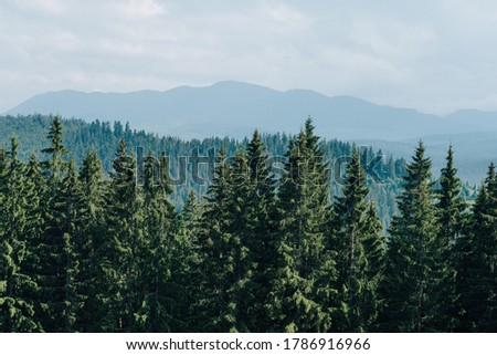 Landscape. Background. Spruce forest on a background of mountain landscape and sky. Copy space. Mountain landscape with coniferous forest Royalty-Free Stock Photo #1786916966