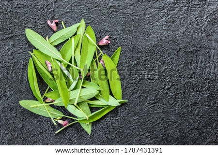 a pile of fresh medicinal sage leaves on a wooden background top view. leaves and flowers of fresh medicinal sage lay flat. sage and copy space. layout with fresh sage leaves. #1787431391