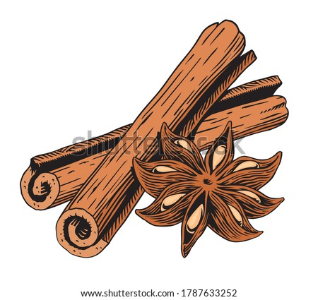 Cinnamon sticks and star anise, isolated on white background. Engraving style vector illustration. Royalty-Free Stock Photo #1787633252