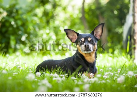 Dog lying in juicy green grass. High quality advertising stock photo. Pets walking in the summer