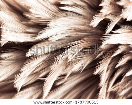 Beautiful abstract white and brown feathers on white background and soft yellow feather texture on white pattern and yellow background, feather background, gold feathers banners #1787900513