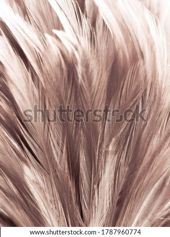 Beautiful abstract white and brown feathers on white background and soft yellow feather texture on white pattern and yellow background, feather background, gold feathers banners #1787960774