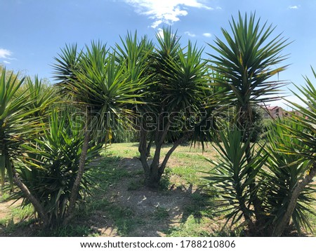 Bright tropical palms against the blue sky and urban space. Summer tropical background.