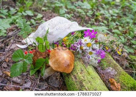 Rest in the forest, a picturesque still life at a halt, a summer bouquet of flowers, mushrooms and berries and women's hat, lying on the fallen tree trunks covered with moss #1788371027