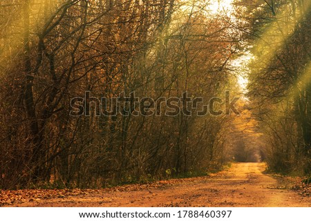 Beautiful autumn  romantic tree tunnel. Natural tree tunnel in Ukraine. Love tunnel in autumn. Autumn forest tunnel of love.  #1788460397