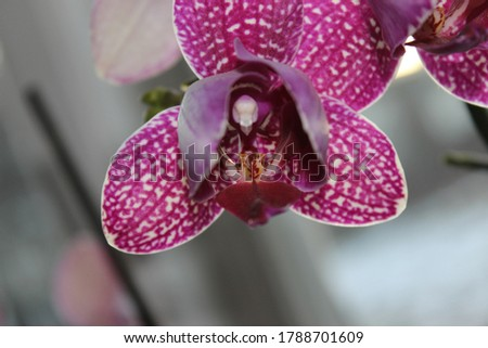 Beautiful picture of a purple orchid