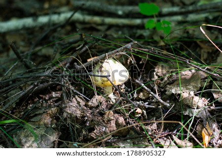 a white toadstool grew up in the forest #1788905327