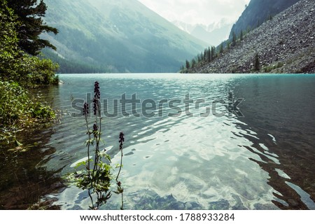 Amazing view to meditative ripples on azure clear calm water of mountain lake. Small violet flower of larkspur grows in transparent turquoise water with relax waves. Atmospheric scenery of mountains. #1788933284