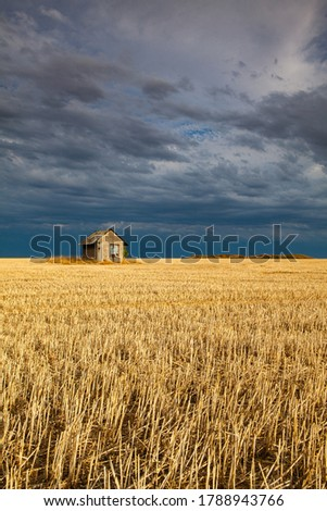Old barn on the empty field after harvesting in sunny day. Panorama picture with mowed wheat field  under  sunny day. Czech Republic.