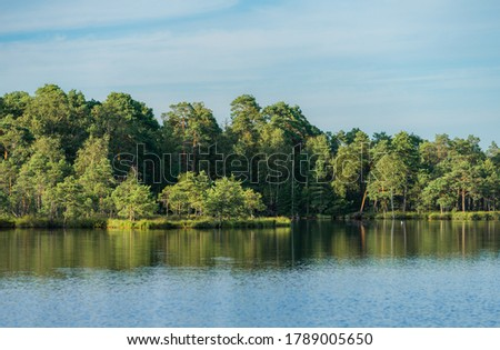 Reflections of forest line in clean bog lake water.  Green foliage of hardwood and evergreen conifer trees. Summer evening in countryside in Estonia, Northern Europe. #1789005650