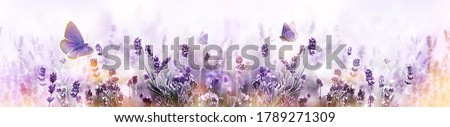 Blossoming Lavender flowers and flying butterfly in summer morning background . Purple growing Lavender panoramic view Royalty-Free Stock Photo #1789271309