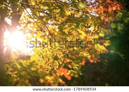 Autumn background, tree branch in autumnal forest, bright warm sun light, golden autumn #1789408934