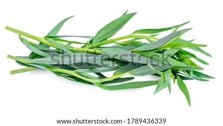 Tarragon herbs close up isolated on white   background. Fresh tarragon leaves macro #1789436339