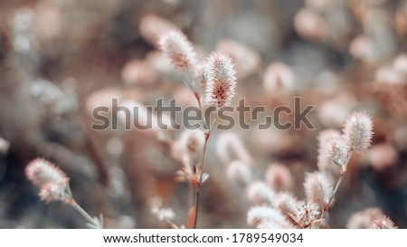 Closeup of soft little wildflowers, abstract floral background, soft focus, beautiful fresh meadow, vintage background little flowers Royalty-Free Stock Photo #1789549034