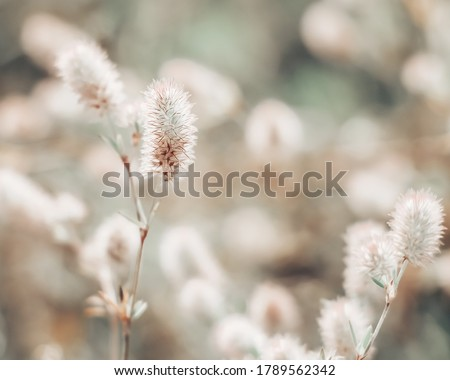 Closeup of little wildflowers, soft light background, abstract floral background, soft focus. Royalty-Free Stock Photo #1789562342