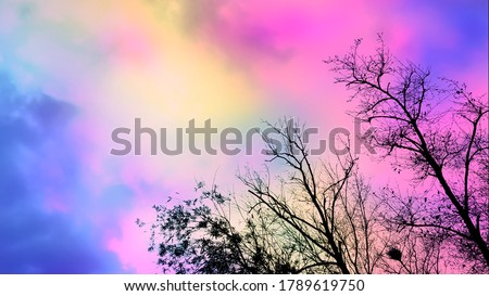Branches against colorful sky background. Trees silhouette against colorful sky background. Colorful abstract art. Rainbow abstract background. Twilight sky backdrop. Twilight clouds. Twilight colors.