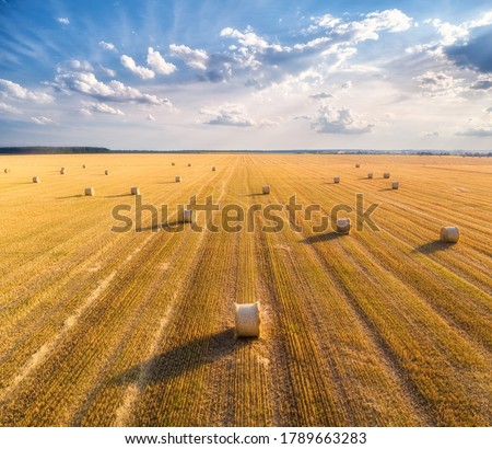 Aerial view of hay bales at sunset in summer. Top view of hay stacks. Agriculture. Field after harvest with hay rolls. Landscape with farm land, straw and meadow. Grain crop, harvesting yellow wheat #1789663283