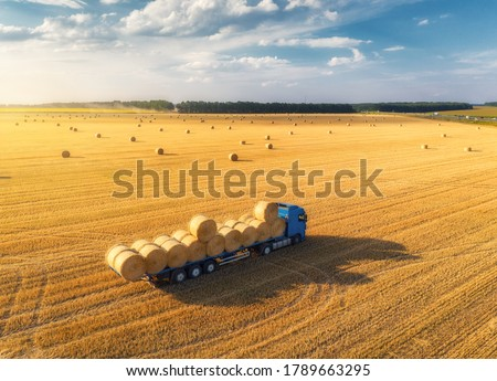 Aerial view of truck with hay bales. Agricultural machinery. Chamfered field and hay stacks after harvesting grain crops at sunset. Top View. Tractor loads bales of hay on truck with trailer. Harvest #1789663295