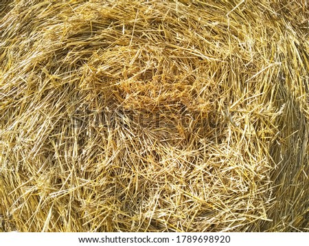 Close-up hay in round bale. Hay bale. Blank. Circle. Golden coiled hay with copy space. Macro golden cylindrical coil of straw. Texture of straw. Hay ball background. #1789698920