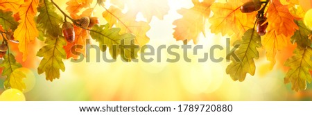 Autumn yellow leaves of oak tree with acorns in autumn park. Fall background with leaves in sun lights with bokeh. Beautiful nature landscape. Royalty-Free Stock Photo #1789720880