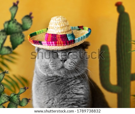 Funny gray cat in a Mexican sambrerro hat on his head. The cat's muzzle is sweet. In the background yellow background green cacti. Funny pets. Scottish Fold cat. Traveling with a pet. Clothes for cats #1789738832