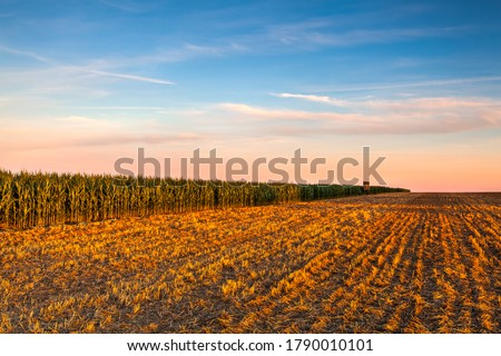 Lookout tower between corn field and empty field after harvesting. Panorama picture with mowed wheat field  under  sunny day. Czech Republic.