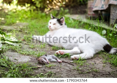 a cat and its prey in the country court #1790343764