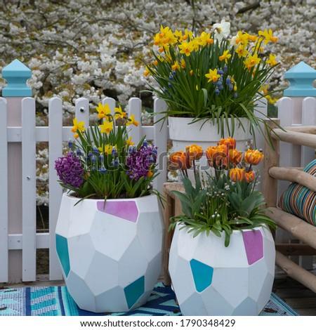 Tulipa Narcissus Hyacinthus_Muscari - bulb plants #1790348429