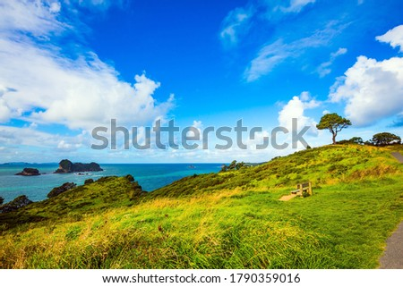 Road to the Cathedral Cove on the North Island. Hills with yellowed grass and a lone tree. Pacific Ocean, New Zealand. The concept of active, exotic, ecological and photo tourism