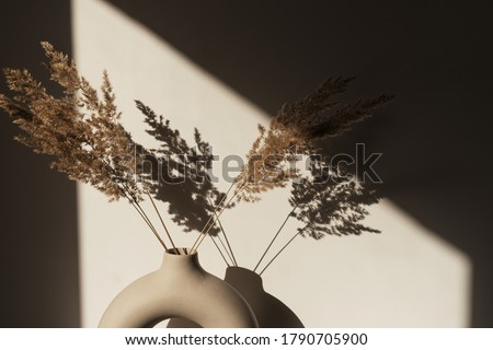 Dry pampas grass / reed in stylish vase. Shadows on the wall. Silhouette in sun light. Minimal interior decoration concept #1790705900