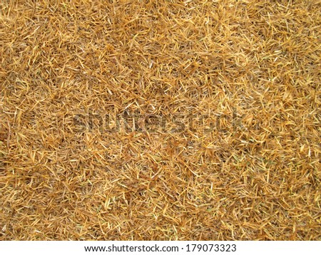 Dying Grass background #179073323