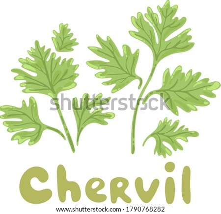 Chervil herb isolated on white background. Chervil branch with leaves. Herbal plants chervil or French parsley for seasoning in cooking. Herbal condiments and culinary flavorings. Salad ingredients #1790768282