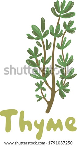 Thyme. A cute branch of thyme illustration. Herbs vector object isolated on white background. Kitchen herbs and spices icon. Fresh thyme sprigs, spice illustration. For menu, packaging and recipes. #1791037250
