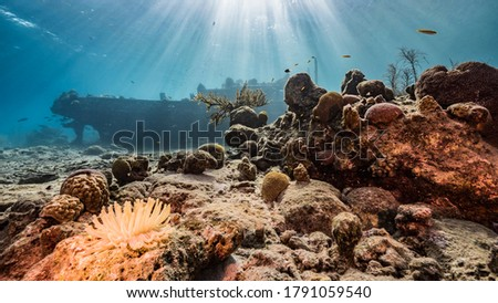 """Ship wreck """"Tugboat"""" in  shallow water of coral reef in Caribbean sea with Sea Anemone, Curacao Flag, view to surface and sunbeams Royalty-Free Stock Photo #1791059540"""