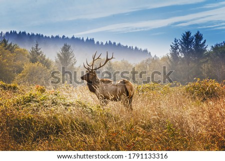Elk with royal stags poses on a meadow in the Yosemite National Park Royalty-Free Stock Photo #1791133316