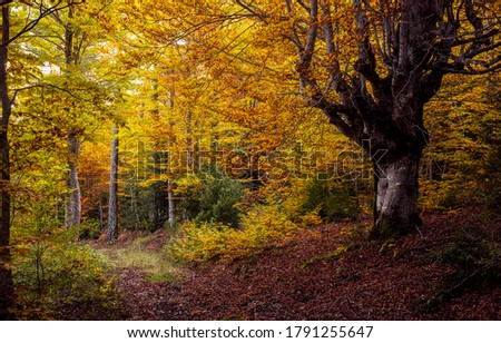Autumn forest trail view. Autumn in autumnal forest. Autumn fall woodland. Forest in autumn season #1791255647