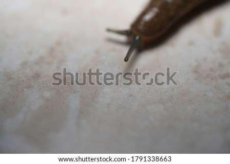 Macro picture of a house slug.