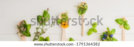 panoramic shot of herbs and green leaves in spoons near flowers on white wooden background, naturopathy concept Royalty-Free Stock Photo #1791364382