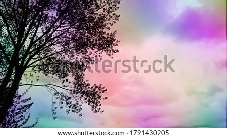 Tree silhouette against colorful sky background. Branches against colorful sky background. Colorful abstract art. Rainbow abstract background. Twilight sky backdrop. Twilight clouds. Twilight colors.