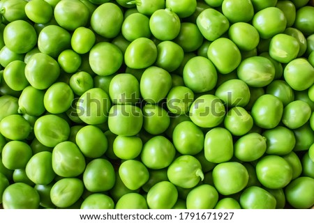 green background with green sweet peas. green sweet pea-complete the picture. background with green sweet peas. #1791671927