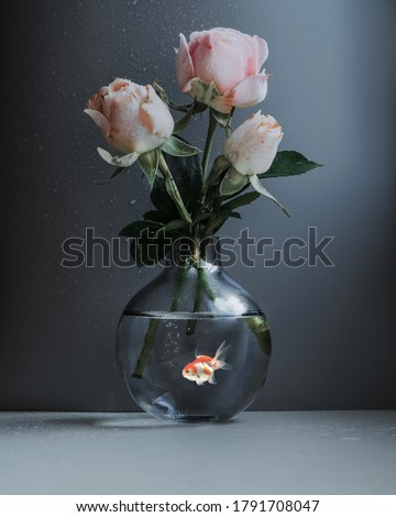 A vase with three beige roses stands on a gray background. A goldfish is floating inside the vase. A drop of water on the wall. Ecology of lakes. Pure water. Environmental protection. Art photography. #1791708047