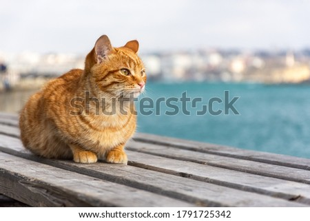 A red cat sits on the background of the sea and looks away. A beautiful tabby cat with surprised eyes. Portrait of a young red kitten on the background of the city. Space for text. Royalty-Free Stock Photo #1791725342