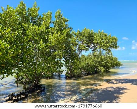 Trees in the Beach of Muro Alto PE #1791776660