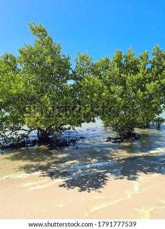 Trees in the Beach of Muro Alto PE #1791777539