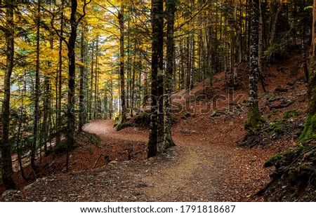 Autumn forest trail view. Forest trail in autumn. Trail in autumn forest. Forest trail in autumn fall #1791818687