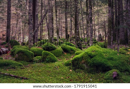 Mossy forest view. Wilderness mossy forest. Green moss in wilderness forest. Woodland green moss #1791915041