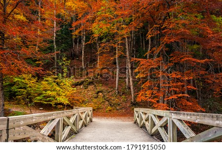 Autumn forest park bridge way. Wooden bridge in autumn forest park. Autumn forest bridge view #1791915050