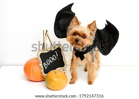 Funny dog in halloween costume photography Royalty-Free Stock Photo #1792147316