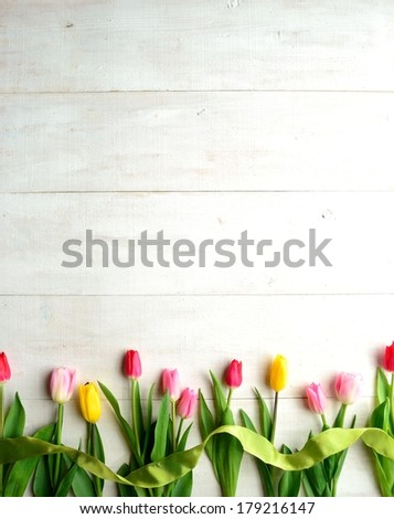 Colorful tulips with yellow green ribbon on white wooden background.Image of spring flowers