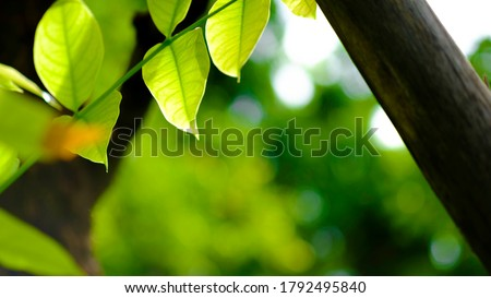 Defocused nature view of green leaf on blurred greenery background in garden with copy space, natural bokeh with daylight, concept, relax color and fresh atmosphere, photo for background or wallpaper